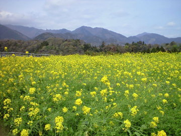 Vol.330 山間の風景 〜 神奈川県丹沢のふもとにて