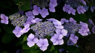 Vol.351 庭の風景 初夏の花たち(6月〜7月) 〜 大磯にて