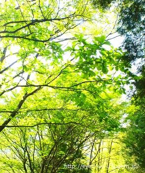 かしわの木