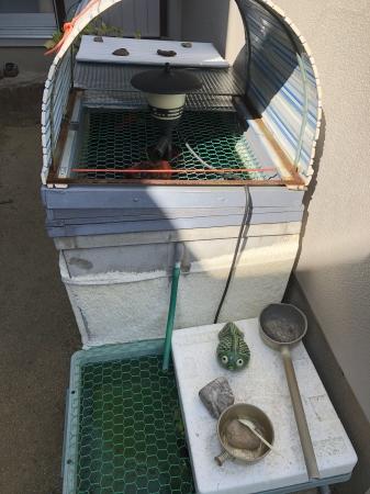 お客様の水槽