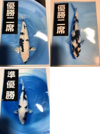 白写り入賞魚