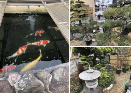 お客様の池、庭