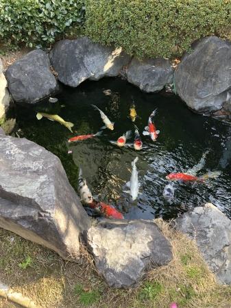 お客様の池