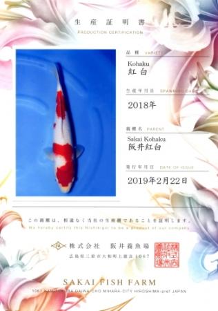 阪井養魚場産の紅白