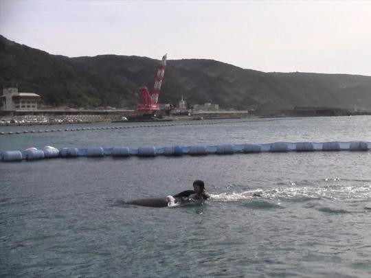 イルカに乗って