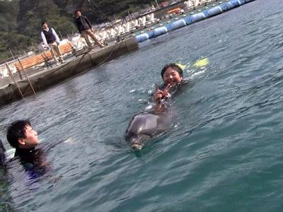 イルカと一緒に