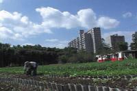 サルー! ハバナ  キューバ都市農業リポート