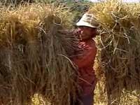 ラオス 農に生きる7人