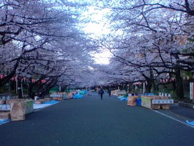 上野 お花見 場所取り
