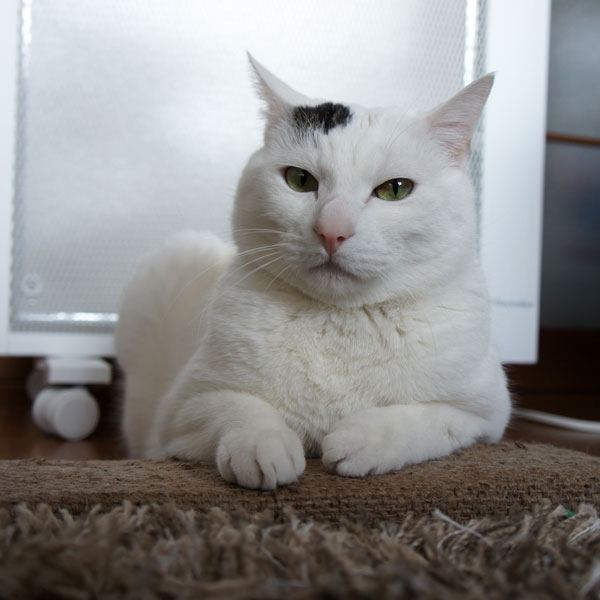 リュイ 猫