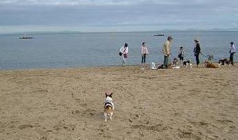 浜辺を駆けるミッキー〜
