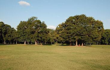 広場西側の木陰