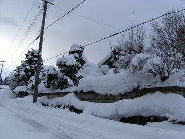 今年の黒川の雪。