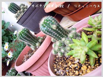 サボテン成長日記2-2
