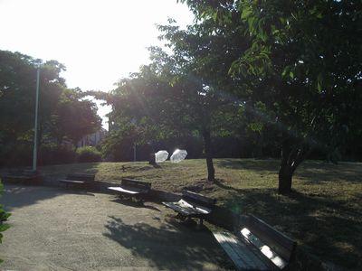 今朝の公園