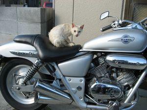 野良とバイク