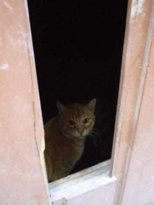 タラゴナの猫