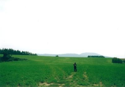 草原で戯れる