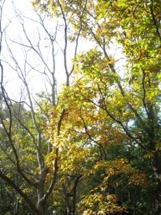 黄色や赤の林が!