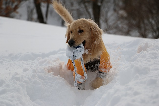 旅犬の そうだランディで行こう!