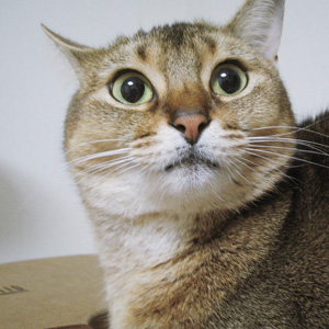 わんこ猫ゆきむら/ルビちゃん