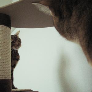 わんこ猫ゆきむら/ルビちゃんとゆきむら