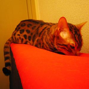 ワンコ猫ゆきむらぶろぐ / ルビちゃんと一緒