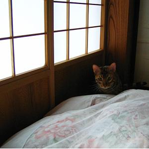 わんこ猫ゆきむら / 朝ですよ