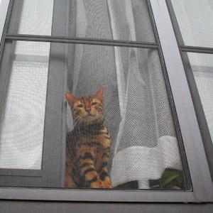 わんこ猫ゆきむらぶろぐ / ばーちゃん視点