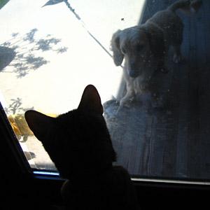 わんこ猫ゆきむらぶろぐ / 二人の視線