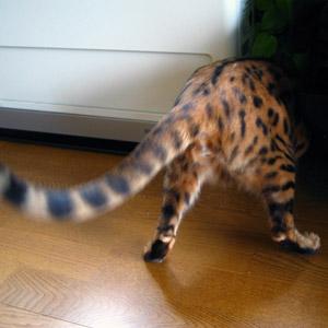わんこ猫ゆきむらぶろぐ / 銀紙ボール