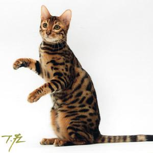 わんこ猫ゆきむらぶろぐ / 10000アクセス記念