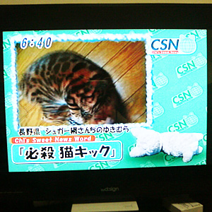 わんこ猫ゆきむら / チーズスイートニュース