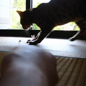 わんこ猫ゆきむらぶろぐ / とんぼ