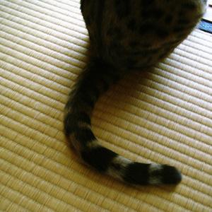 わんこ猫ゆきむらぶろぐ / カワイイ