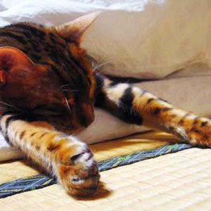 わんこ猫ゆきむらぶろぐ / かわいい