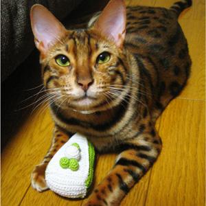わんこ猫ゆきむらブログ / cats yukimu