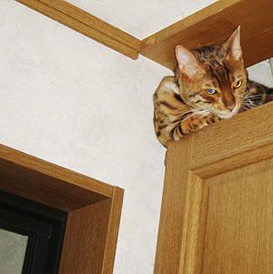 わんこ猫ゆきむらぶろぐ / 得意気