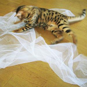 わんこ猫ゆきむらぶろぐ / トツギーの