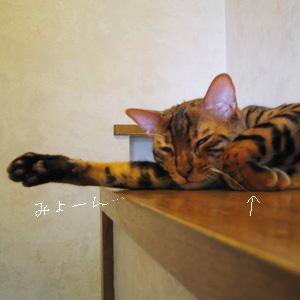 わんこ猫ゆきむらブログ