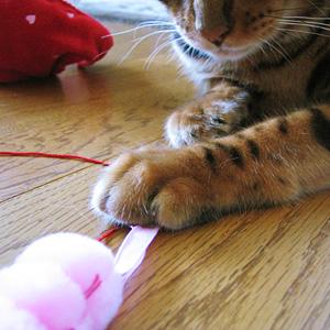 わんこ猫ゆきむらぶろぐ / コスプレ