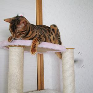わんこ猫ゆきむらぶろぐ / かわゆす