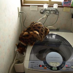わんこ猫ゆきむらぶろぐ / 家政婦