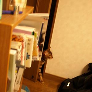 わんこ猫ゆきむらぶろぐ / 侵入