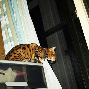 わんこ猫ゆきむらぶろぐ / おばけ