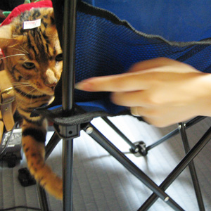 ベンガル猫ゆきむら / 監督