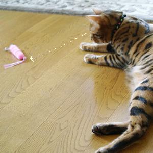 わんこ猫ゆきむらぶろぐ / きになる