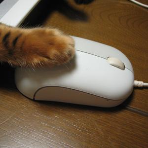 わんこ猫ゆきむらぶろぐ / 猫の手