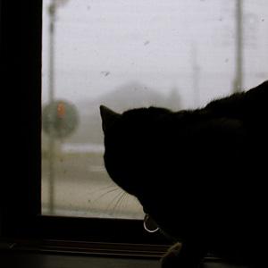 ベンガル猫ゆきむら / 天気予報