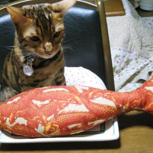 ベンガル猫ゆきむら お食事